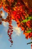 Folhas de outono douradas Foto de Stock Royalty Free