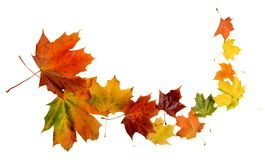 Folhas de outono durante o blizzard isolado no branco Imagens de Stock Royalty Free