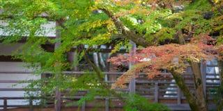 Folhas de outono e árvore do outono Foto de Stock