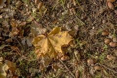 Folhas de outono e bolota Textura abstrata do outono imagens de stock