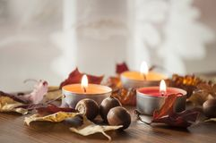 Folhas de outono e bolotas coloridas do carvalho vermelho do norte e da colar ambarina na placa de madeira Fotografia de Stock Royalty Free