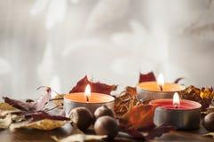 Folhas de outono e bolotas coloridas do carvalho vermelho do norte e da colar ambarina na placa de madeira Foto de Stock Royalty Free
