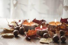 Folhas de outono e bolotas coloridas do carvalho vermelho do norte e da colar ambarina na placa de madeira com fundo branco Imagens de Stock Royalty Free