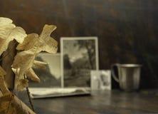 Folhas de outono e fotos desvanecidas velhas Uma memória de épocas velhas Imagem de Stock