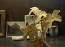 Folhas de outono e fotos preto e branco desvanecidas velhas Uma memória de épocas velhas Foto de Stock
