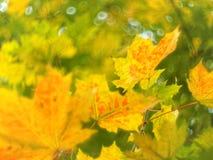 Folhas de outono e swirly um bokeh foto de stock