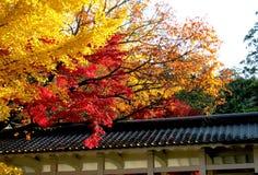 Folhas de outono em Higashiyama Fotos de Stock Royalty Free