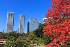 Folhas de outono em jardins de Hamarikyu, Tóquio Fotos de Stock
