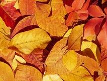 Folhas de outono em marrom, em vermelho e em amarelo como a textura foto de stock royalty free