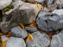 Folhas de outono em rochas fotografia de stock