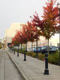Folhas de outono em toda sua glória Fotos de Stock