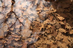 Folhas de outono em um córrego Imagens de Stock Royalty Free
