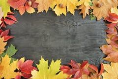 Folhas de outono em um fundo preto de uma árvore velha Imagem de Stock