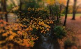 Folhas de outono em um parque que negligencia um córrego Fotografia de Stock Royalty Free