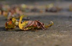 Folhas de outono em um passeio Fotografia de Stock Royalty Free