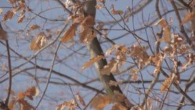 Folhas de outono em uma árvore video estoque