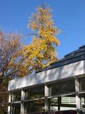 Folhas de outono em uma árvore Imagem de Stock