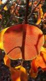 Folhas de outono em uma árvore com luz solar Foto de Stock