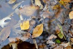 Folhas de outono em uma poça Fotografia de Stock Royalty Free