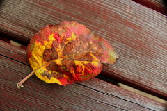 Folhas de outono em uma tabela de madeira Fotografia de Stock