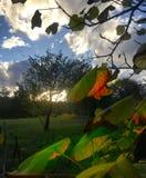 Folhas de outono entrantes no por do sol fotografia de stock