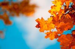 Folhas de outono, foco muito raso Imagens de Stock Royalty Free