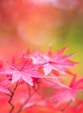 Folhas de outono, foco muito raso imagem de stock