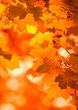 Folhas de outono, foco muito raso fotografia de stock