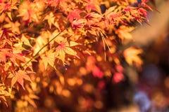 Folhas de outono, foco muito raso Fotos de Stock