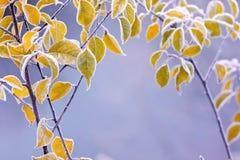 Folhas de outono gelados do colourfull Foto de Stock