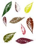 Folhas de outono II Foto de Stock