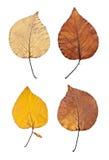 Folhas de outono isoladas imagens de stock royalty free