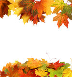 Folhas de outono isoladas Foto de Stock Royalty Free