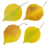 Folhas de outono isoladas ajustadas Fotos de Stock Royalty Free
