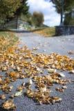 Folhas de outono marrons secadas no lado de uma estrada Imagens de Stock