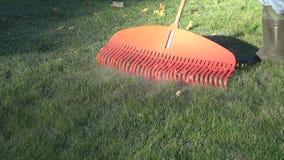 Folhas de outono masculinas do ancinho do trabalhador com o ancinho vermelho no jardim 4K video estoque