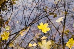 folhas de outono na água Fotos de Stock Royalty Free
