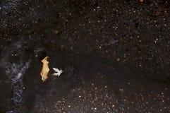 Folhas de outono na água, neve molhada Imagem de Stock