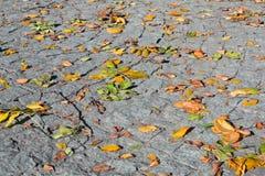 Folhas de outono na caminhada de pedra. Imagens de Stock Royalty Free