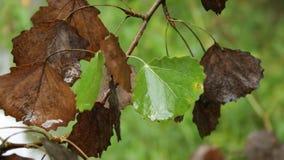 Folhas de outono na chuva filme