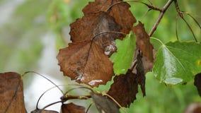 Folhas de outono na chuva video estoque