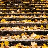 Folhas de outono na escada Foto de Stock Royalty Free