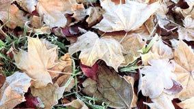 Folhas de outono na geada video estoque