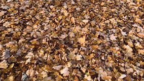 Folhas de outono na geada vídeos de arquivo
