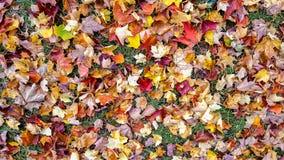 Folhas de outono na grama fotos de stock royalty free