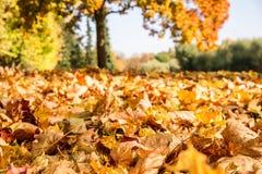 Folhas de outono em um parque Foto de Stock