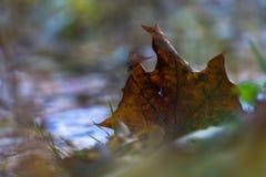 Folhas de outono na poça Imagem de Stock Royalty Free