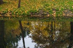 Folhas de outono na poça durante a queda Imagens de Stock