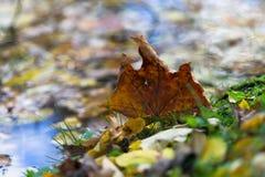 Folhas de outono na poça durante a queda Imagens de Stock Royalty Free