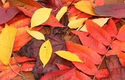Folhas de outono na queda imagens de stock royalty free